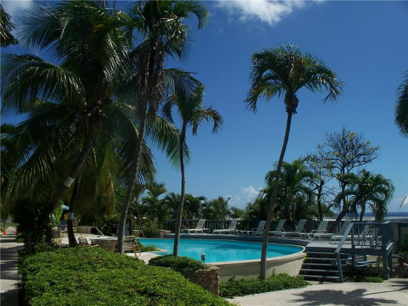 Lovely Palm Tree Gardens & Pool