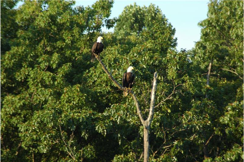 Eagles off the Rear View 4380 Plum Point Road Huntingtown MD 20639